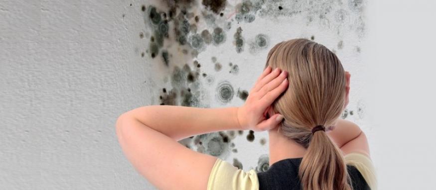 Billig fjernelse af skimmelsvamp bestilles online